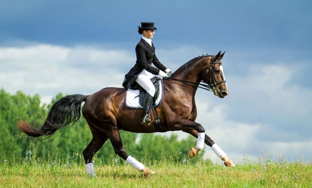 Was passiert mit meinem Carevallo Pferdefutter wenn sich mein Pferd verletzt?