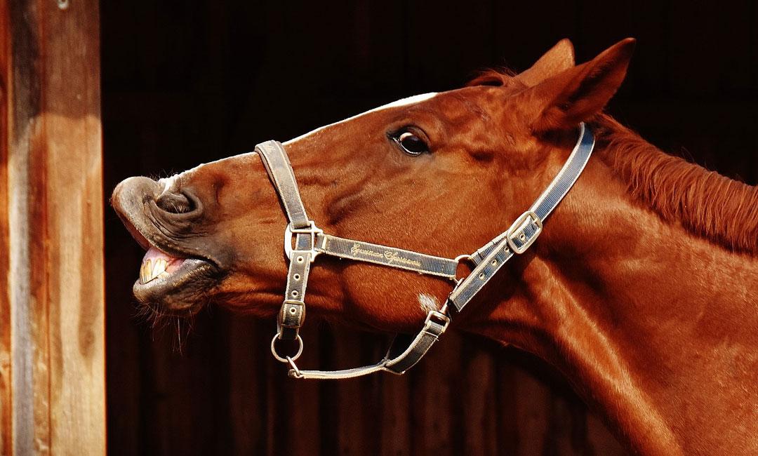 Allergien und Unverträglichkeiten beim Pferd