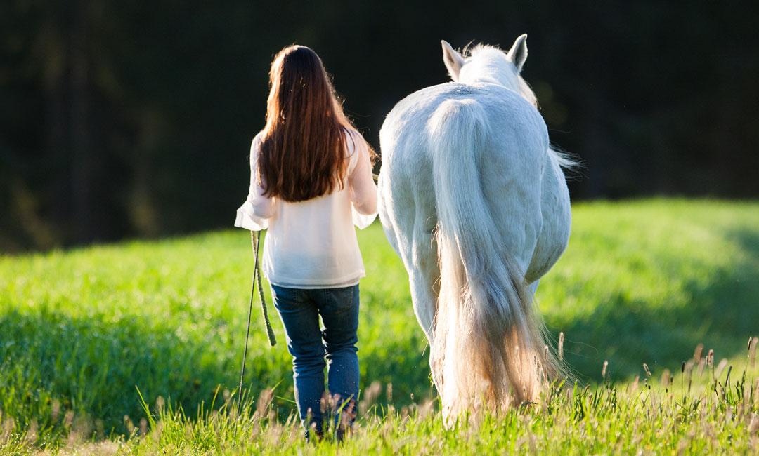 10 Tipps wie du dein Pferd im Frühling und Herbst unterstützen kannst