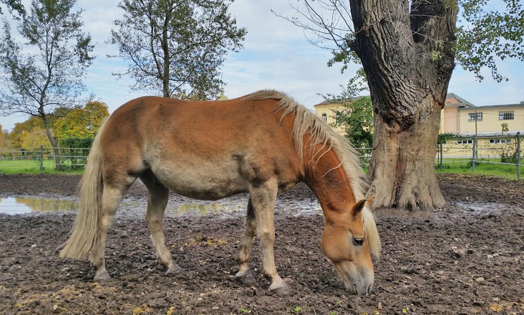 Geophagie - Mein Pferd frisst Erde
