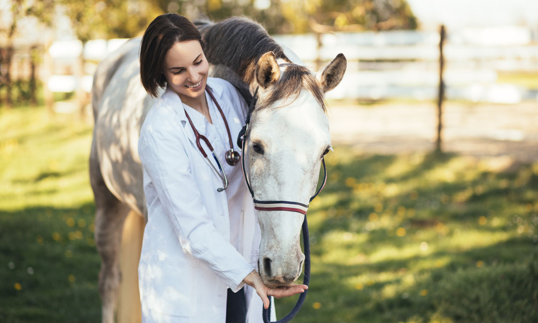 Cushing Pferd richtig füttern