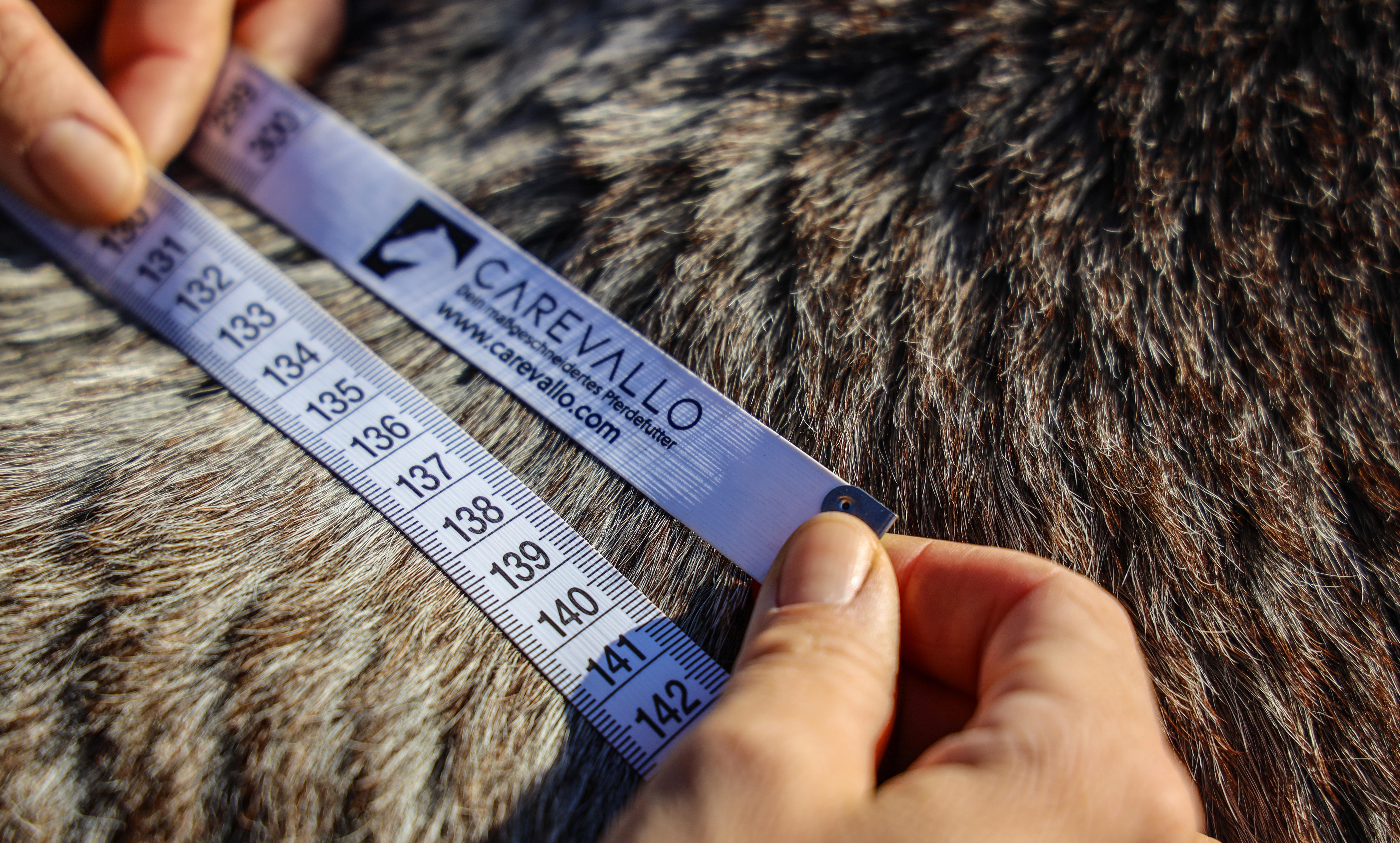 Body Condition Score für Pferde