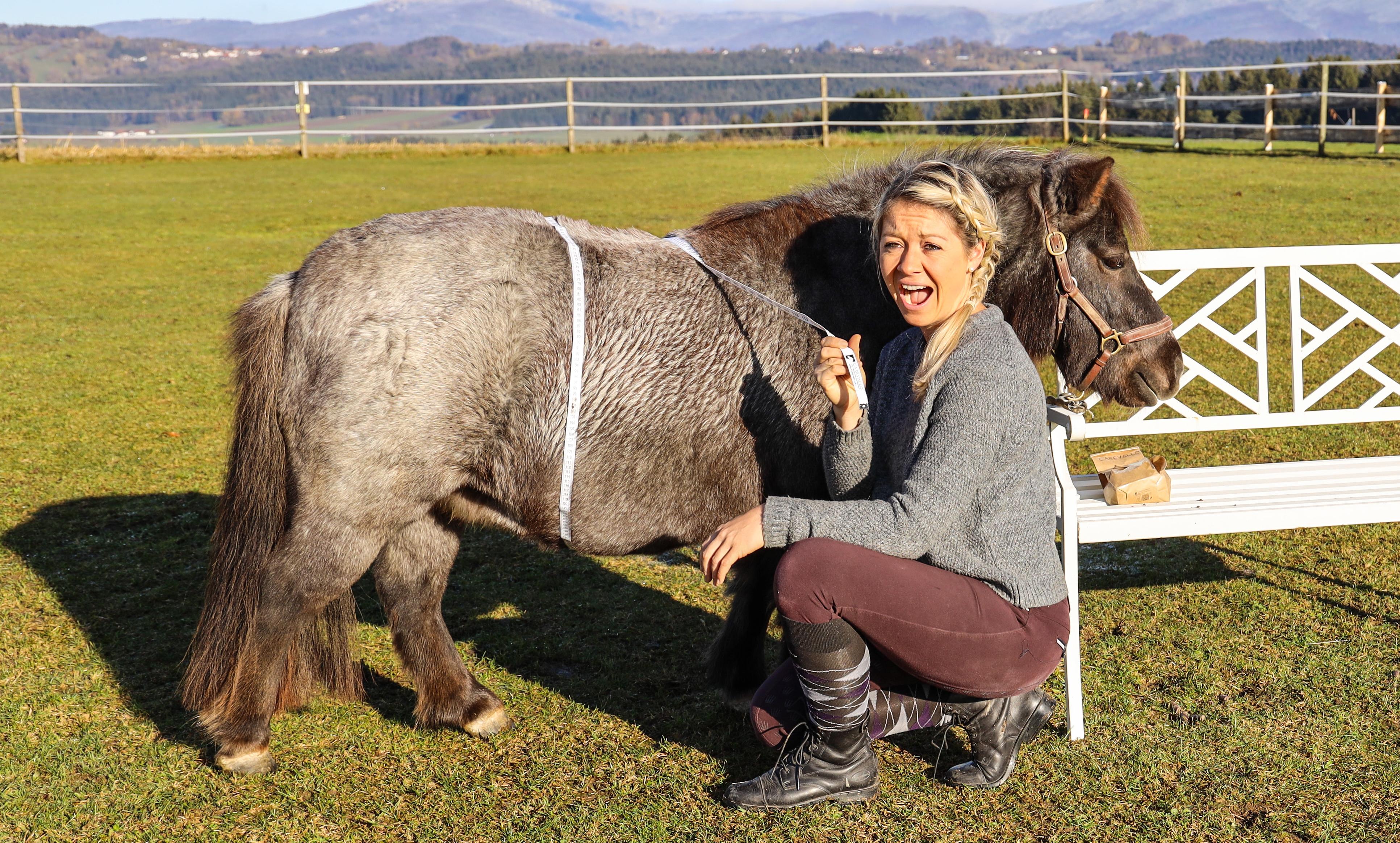 Fütterung dicker Pferde und das richtige Pferdefutter