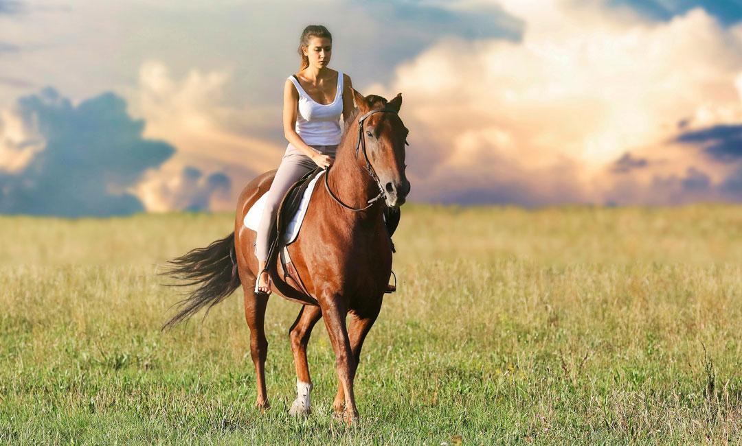 Richitges Pferdefutter bei Kotwasser