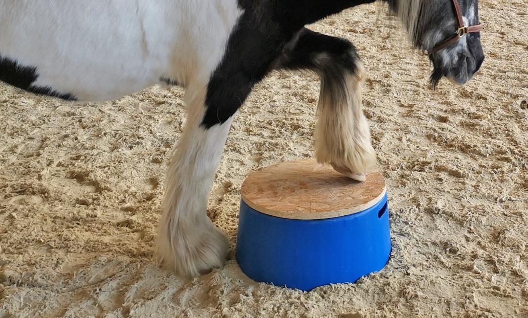 Podest für dein Pferd selber bauen