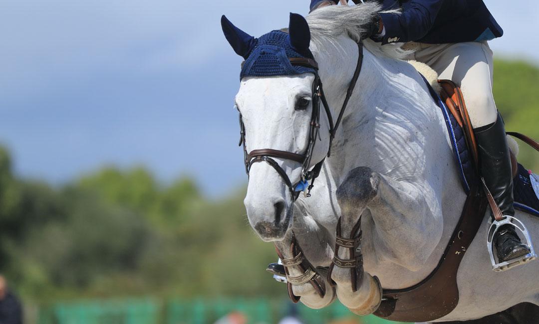Tipps um das Immunsystem deines Pferdes zu stärken
