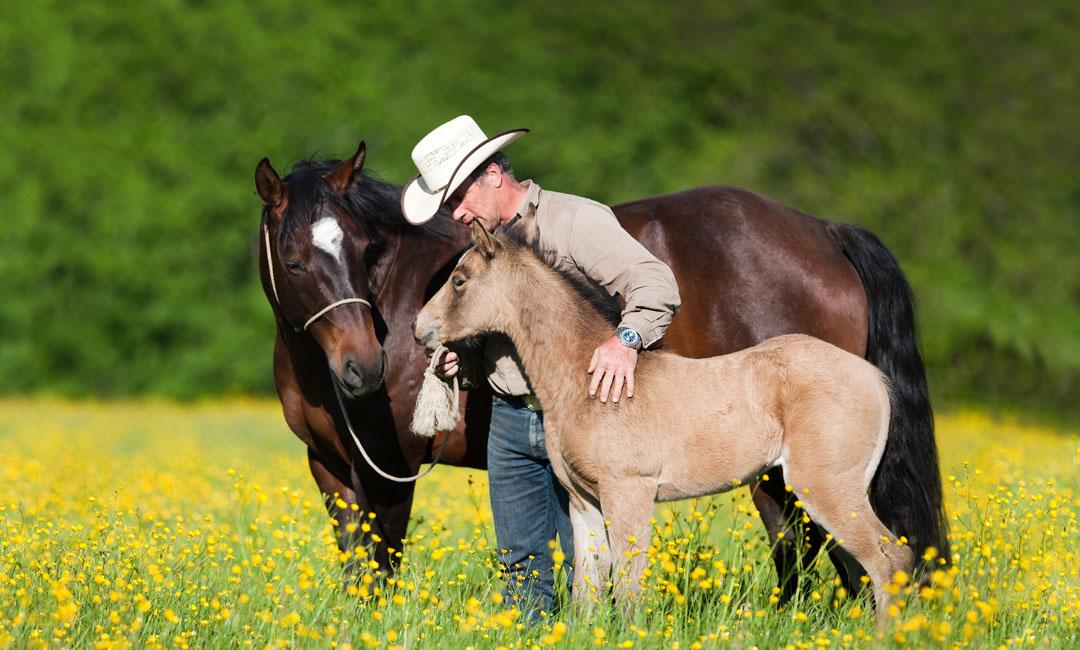 Strategische versus selektive Entwurmung beim Pferd