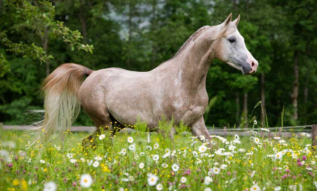 Wie halte ich mein Pferd auf der Weide gesund?