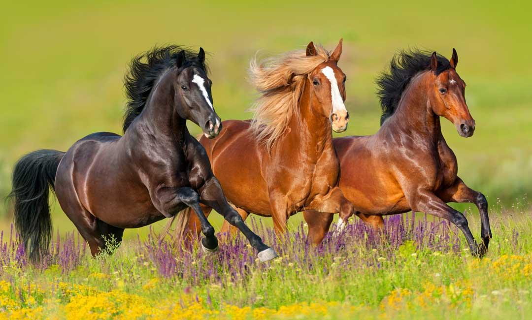Pferdeweide - Viel hilft nicht immer viel – auf den Inhalt kommt es an