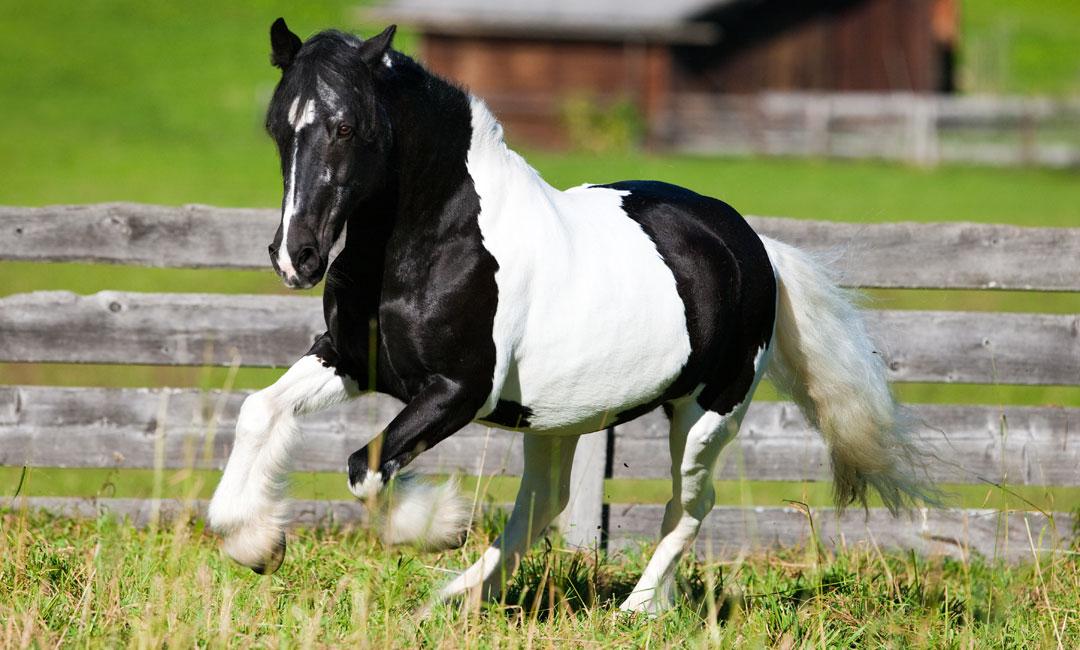 Wie du dein Pferd richtig anweidest