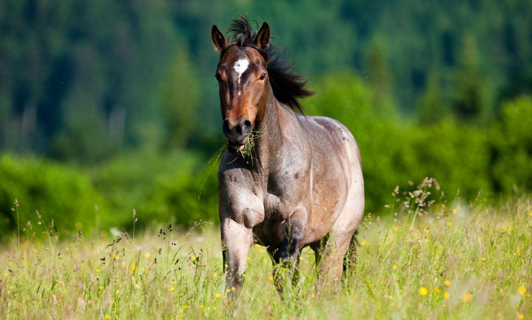 Wie sieht die optimale Pferdeweide aus?